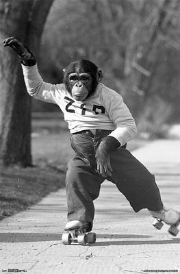Life - Zippy the Monkey Poster