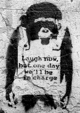 Banksy Poster Affe Laugh Now