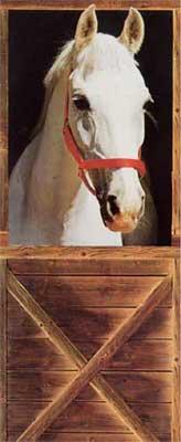 Fototapete - Pferd - Klicken für grössere Ansicht