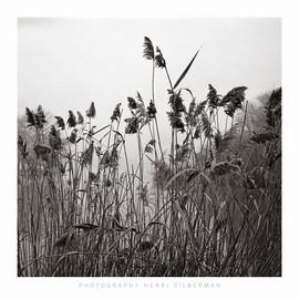 Henri Silberman - Prospect Lake Grasses - Prospect Lake